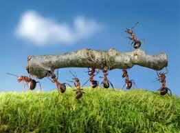 mieren zijn sterk